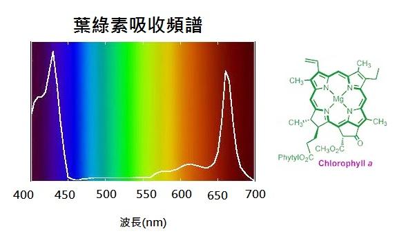 圖九、葉綠素結構及吸收頻譜.png