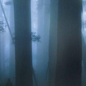 賴春標《塔克金溪 千年霧檜》1(已售出)